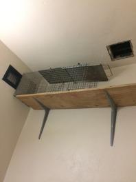 raccoon-trap
